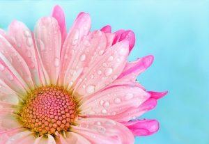 flower-3140491__340